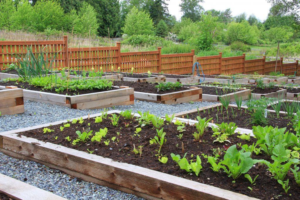 Flowers, Landscape, Landscaping, Garden, Gardening, Bedding, Garden beds, Flower beds